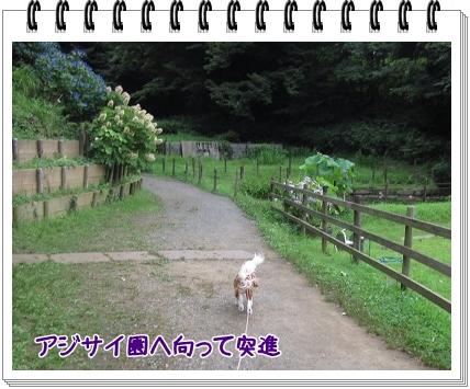2011070903.jpg