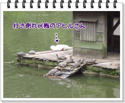 2011070908.jpg