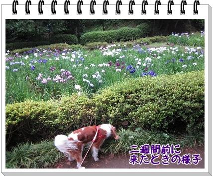 2011070911.jpg
