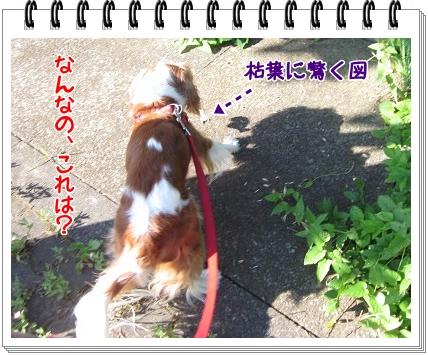 2011071004.jpg