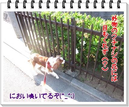 2011071702.jpg
