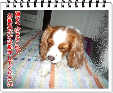 2011072904.jpg