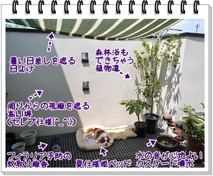 2011081506.jpg