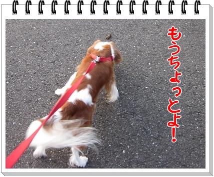 2011081602.jpg