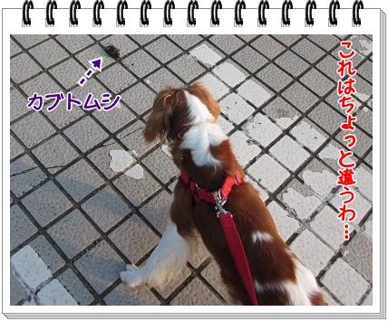 2011081604.jpg