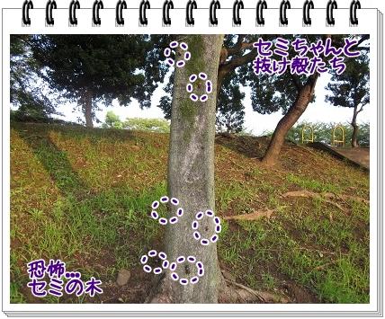 2011081605.jpg