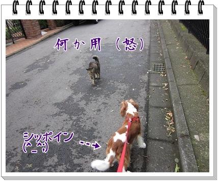 2011090408.jpg