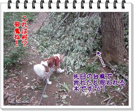 2011100809.jpg
