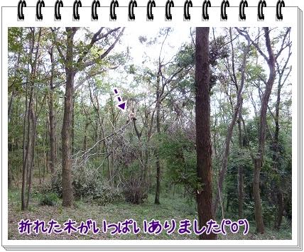 2011101103.jpg