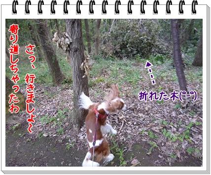 2011101104.jpg