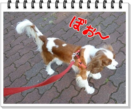 2011101305.jpg