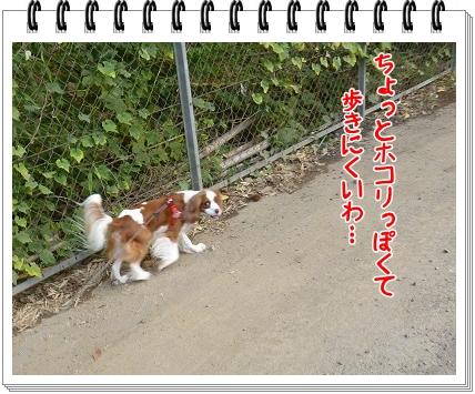 2011101402.jpg
