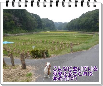 2011101508.jpg