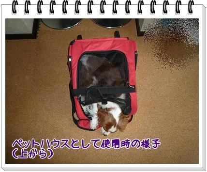 2011101602.jpg