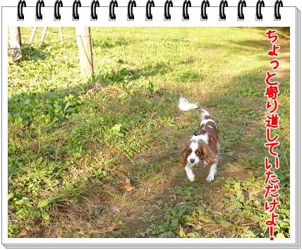 2011103008.jpg