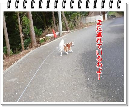 2011111306.jpg