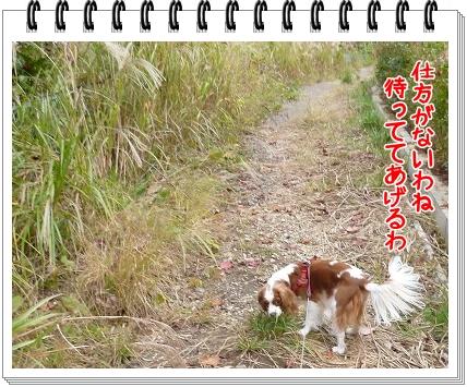 2011111309.jpg