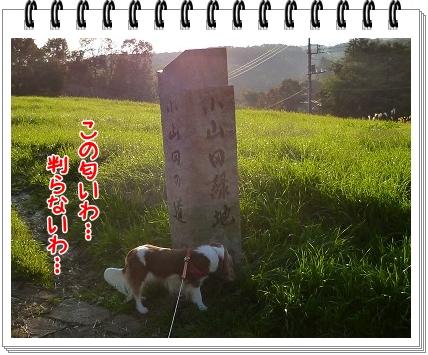 2011111925.jpg