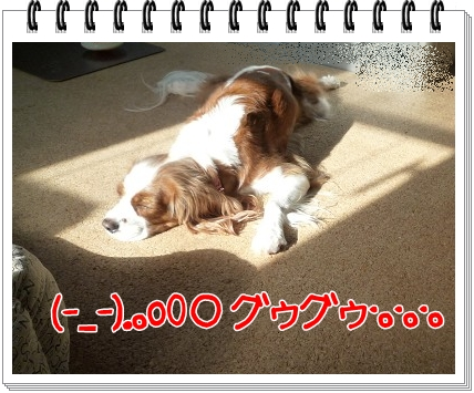 2011112103.jpg