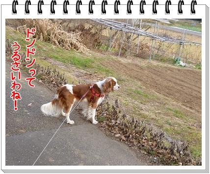 2012010203.jpg