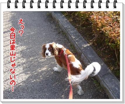 2012010901.jpg