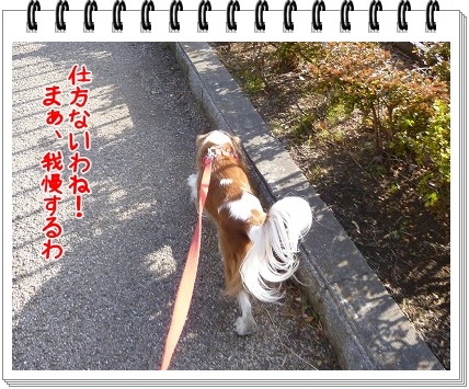 2012010902.jpg