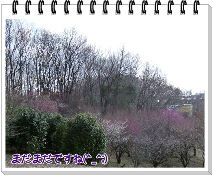 2012031209.jpg