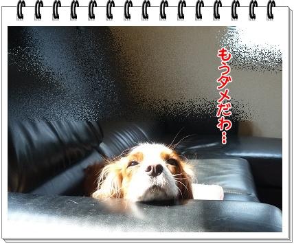 2012032004.jpg