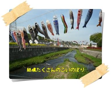 鶴見川のこいのぼり