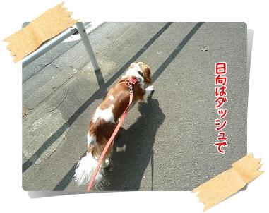 b20100828.jpg