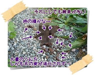 b20101206.jpg