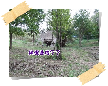 c20101024.jpg