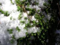 川苔山の苔