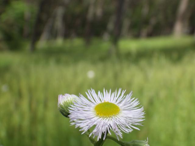 林の中の花
