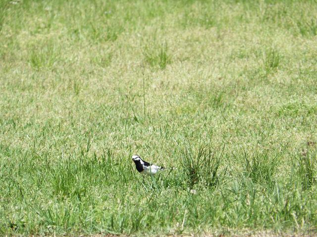 小鳥の散歩