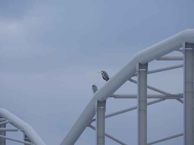 橋の上の鳥
