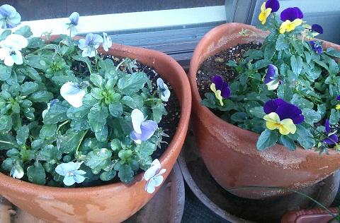 gardening33.jpg