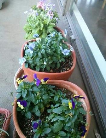 gardening34.jpg