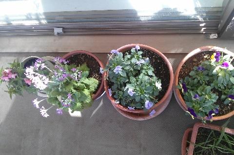 gardening42.jpg