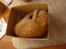 本日の三行日記-box