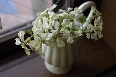 s-ルッコラの花