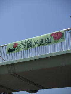 野毛山公園のバラの花 I