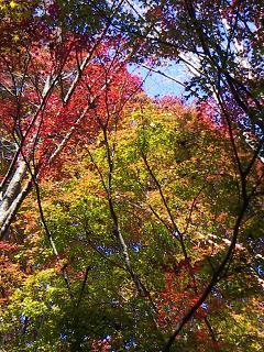 高尾山の紅葉 A