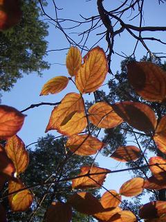 高尾山の紅葉 I