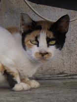 猫 赤門町 B