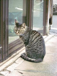 猫 石川町