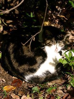 猫 紅葉ヶ丘