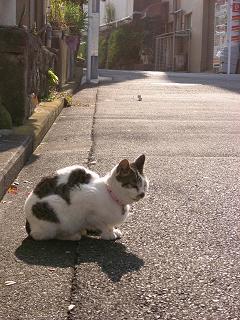 猫 戸部町