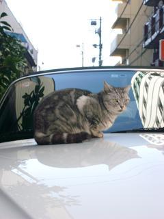 猫 末吉町
