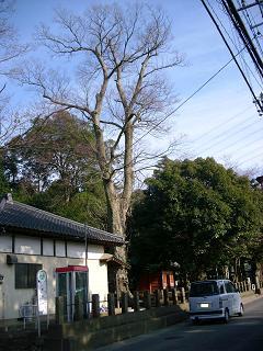 堀兼神社~狭山市堀兼B